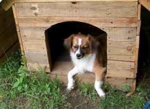 Mi perro Bistek en su casa